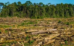 Deforestación cero e impactos de los monocultivos en la Amazonía